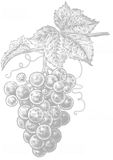 grape drawing Mirabelle Tours
